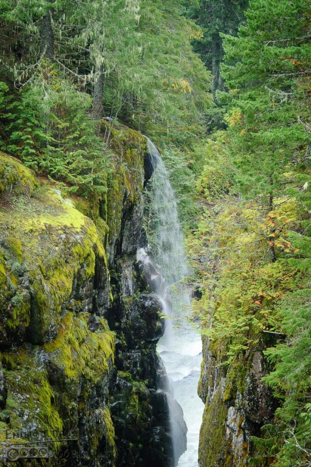 0055-Mt_Rainier_Drive_DIGI