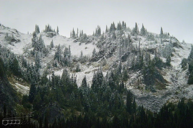 0088-Mt_Rainier_Drive_DIGI