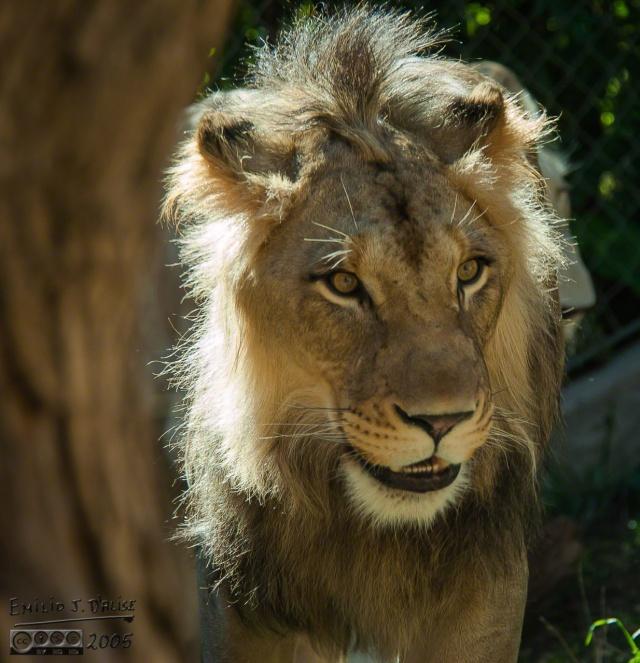 1948_CheyenneMtn_Zoo_A_DIGI