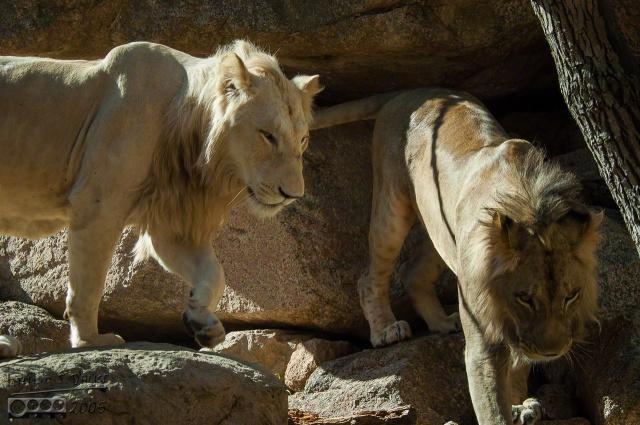 1952_CheyenneMtn_Zoo_A_DIGI