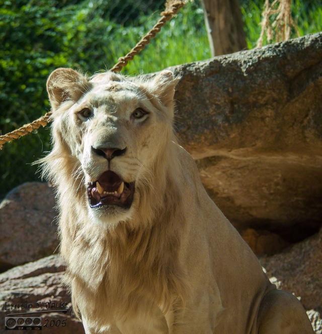 1955_CheyenneMtn_Zoo_A_DIGI