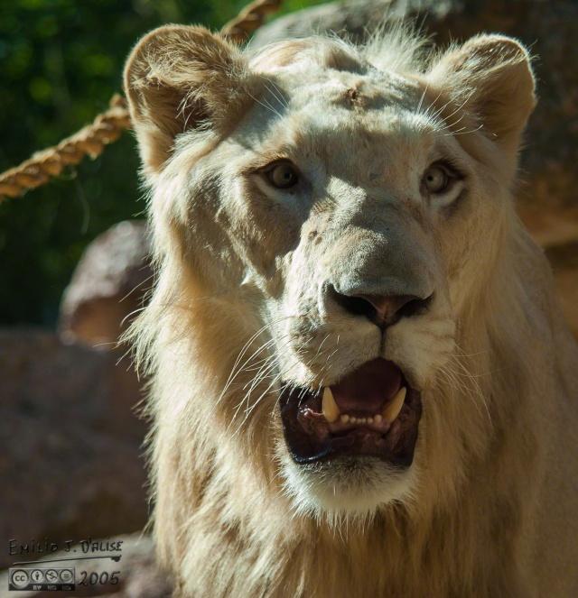 1957_CheyenneMtn_Zoo_A_DIGI