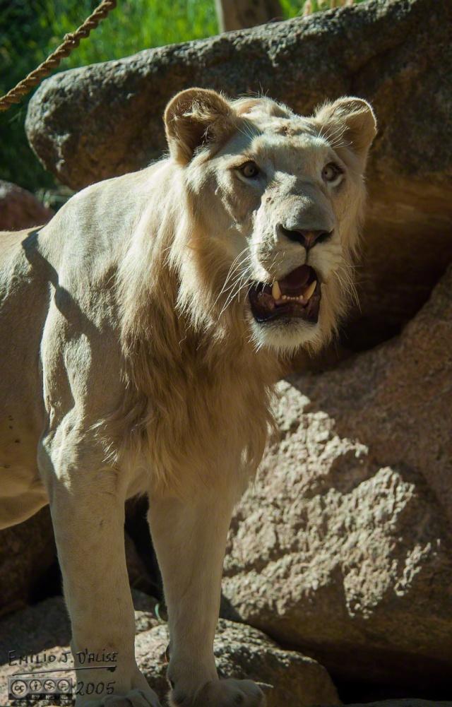 1960_CheyenneMtn_Zoo_A_DIGI