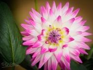 19AUG2011_1__DSC5109_DIGI