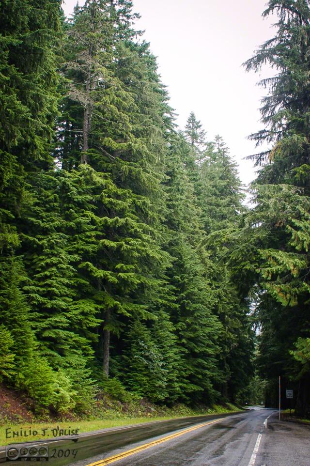 DSC_0025-Mt_Rainier_B_DIGI