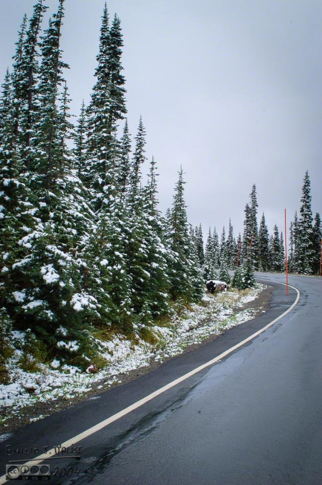 DSC_0098-Mt_Rainier_Drive_DIGI