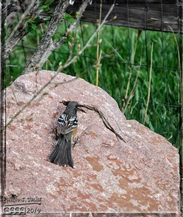 Birds, True Vista,