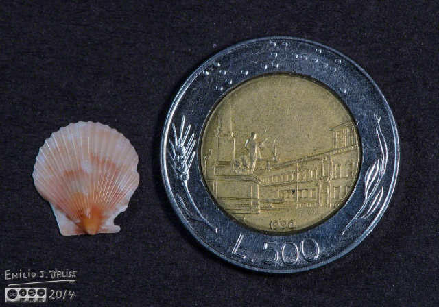 Reference shell and reference 500 Lire coin