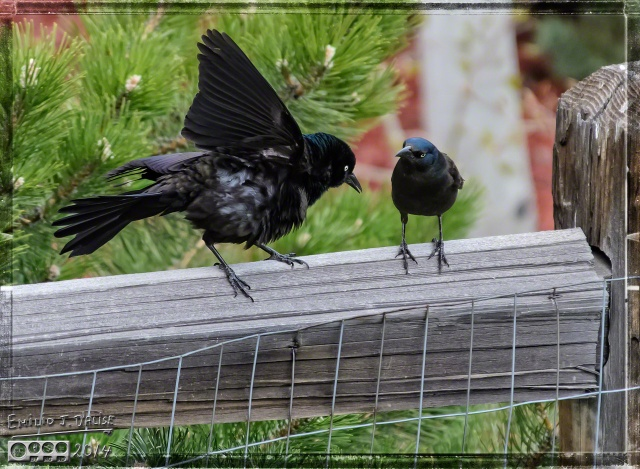 """""""Yes, I did. I'm still wet under my wing, see!?"""""""