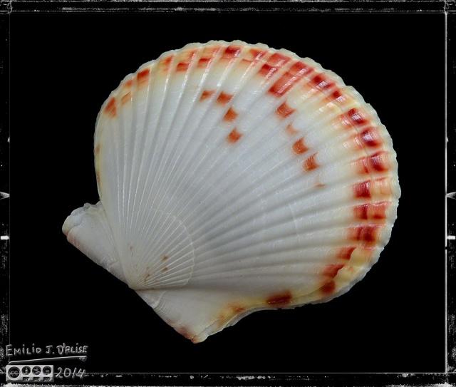 Shells, Macros,