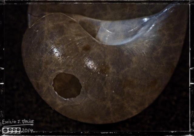Seashells, Macros,