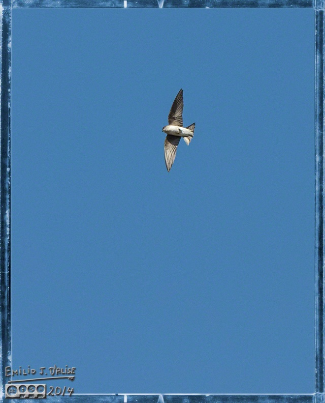 birds, clouds,