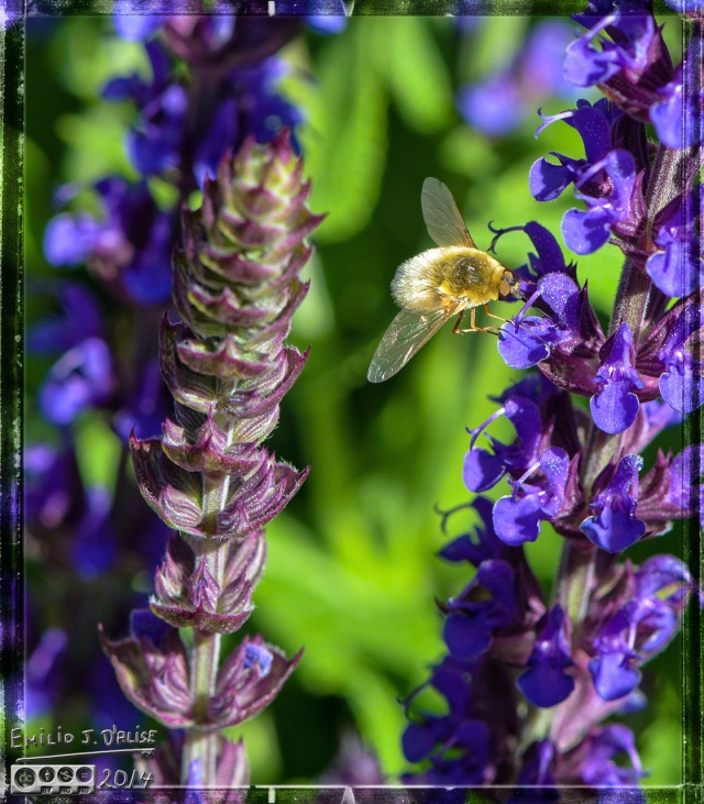 Flowers, bees,
