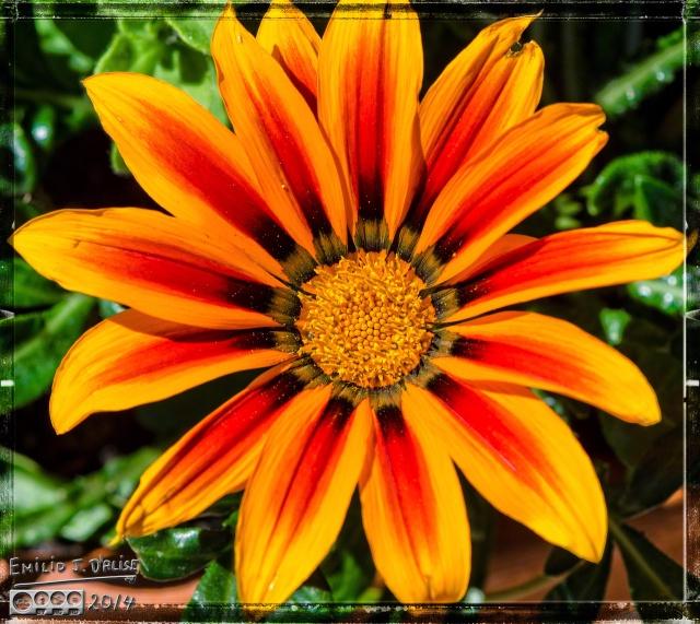 Flowers, bees,