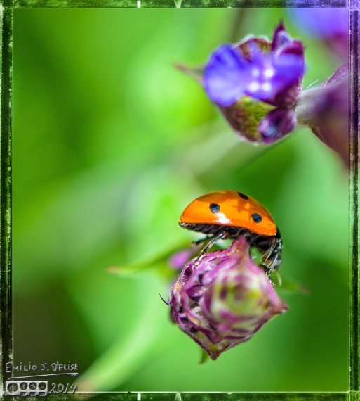 Flowers, bees,insects,