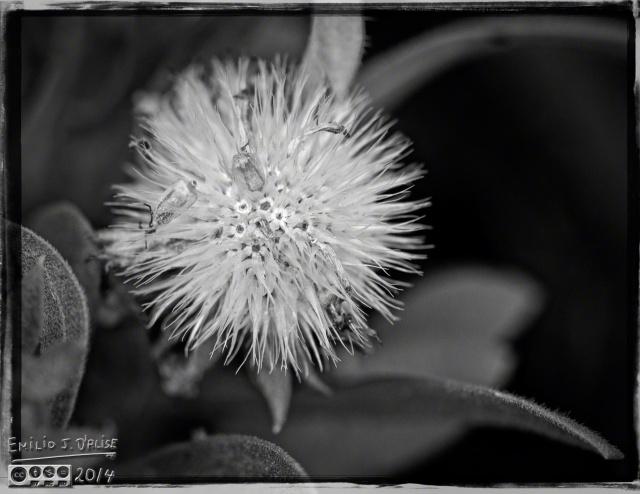 2014 Flowers,