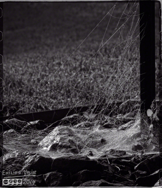 cobwebs, dew