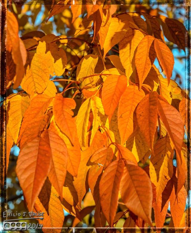 Fall,