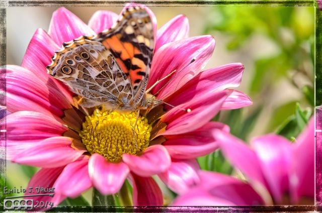 Bee, Butterfly,