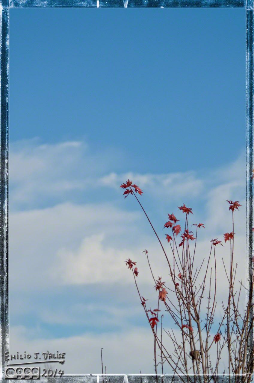Fall colors,
