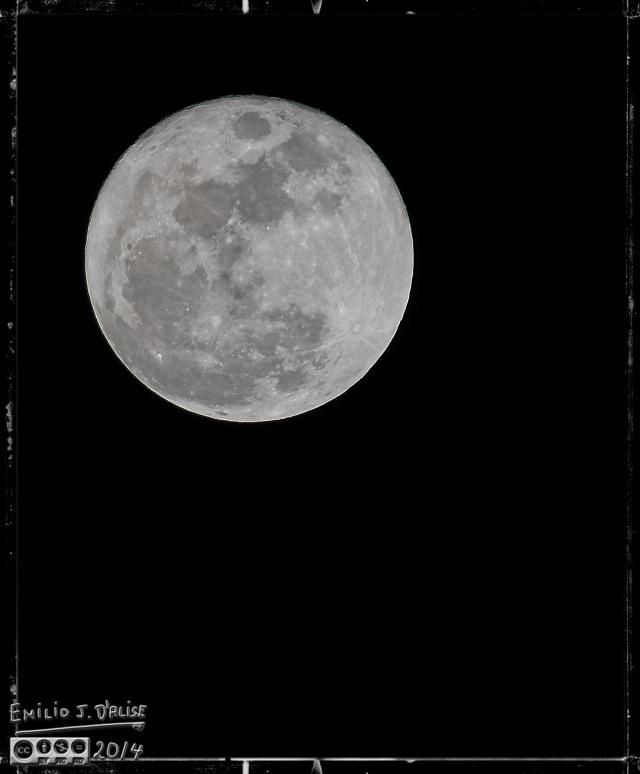 Cruise 2014, Bird, Moon,