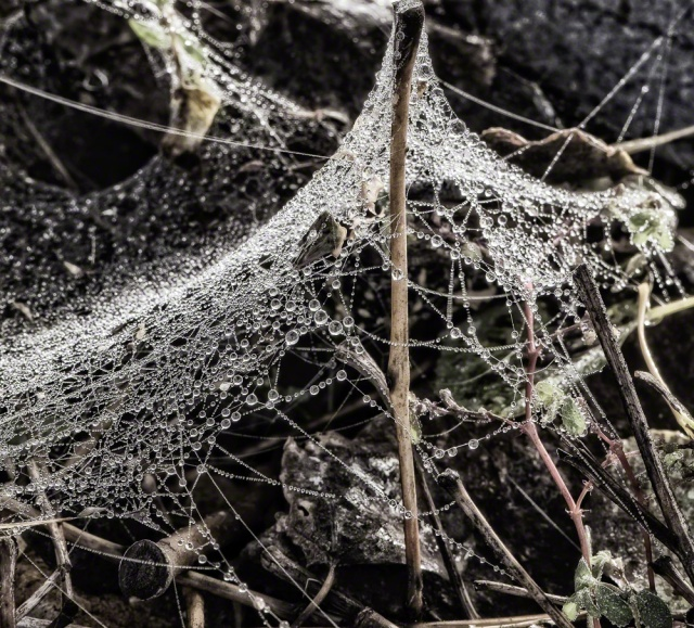 cobwebs, dew
