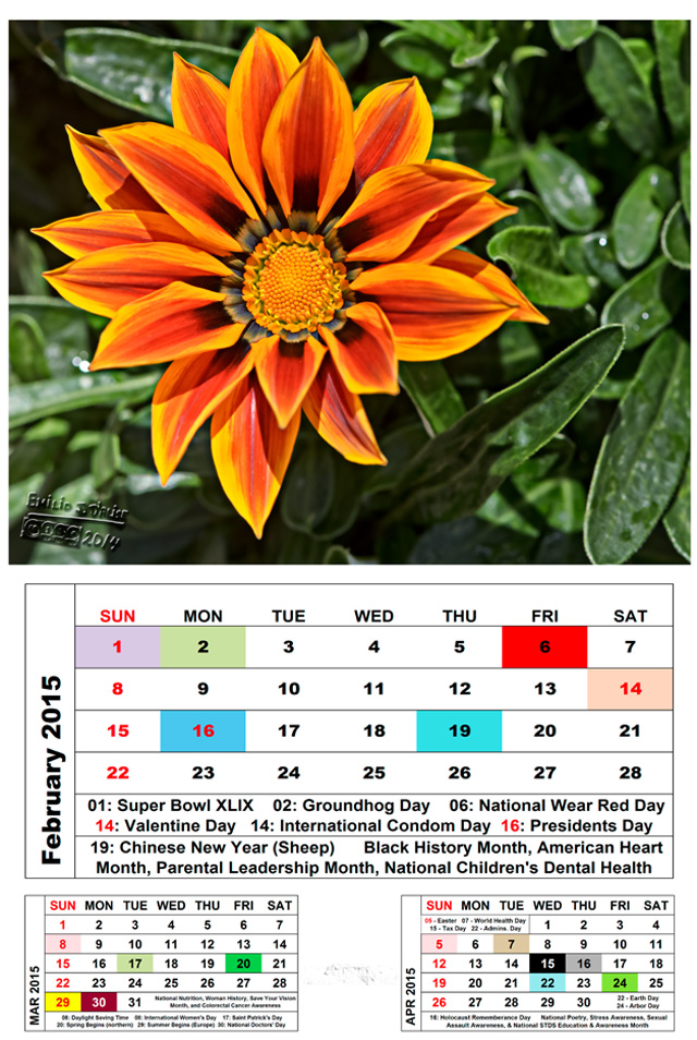FEB2015-Cal-Flower_Blog-72dpi