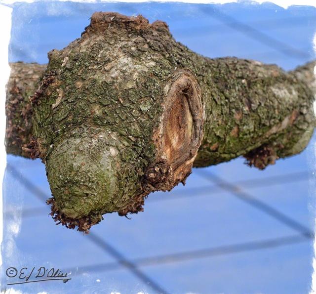 0001-treetrunk-monster-6-Processed-2_DIGI
