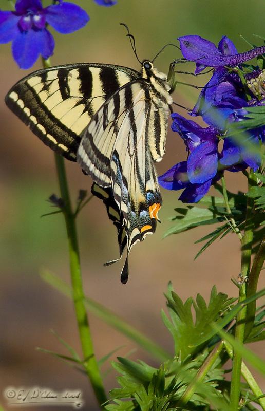 4518_Butterfly_on_flower