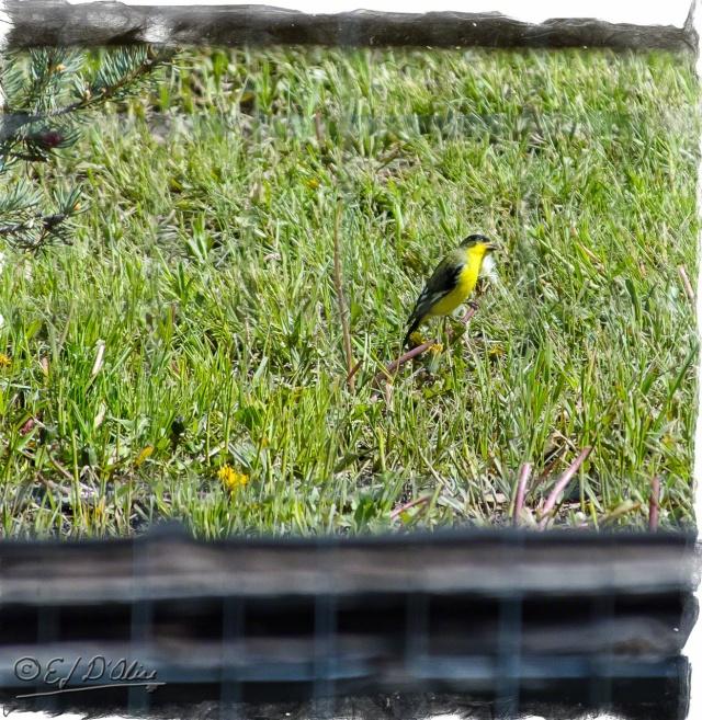 Birds of True Vista