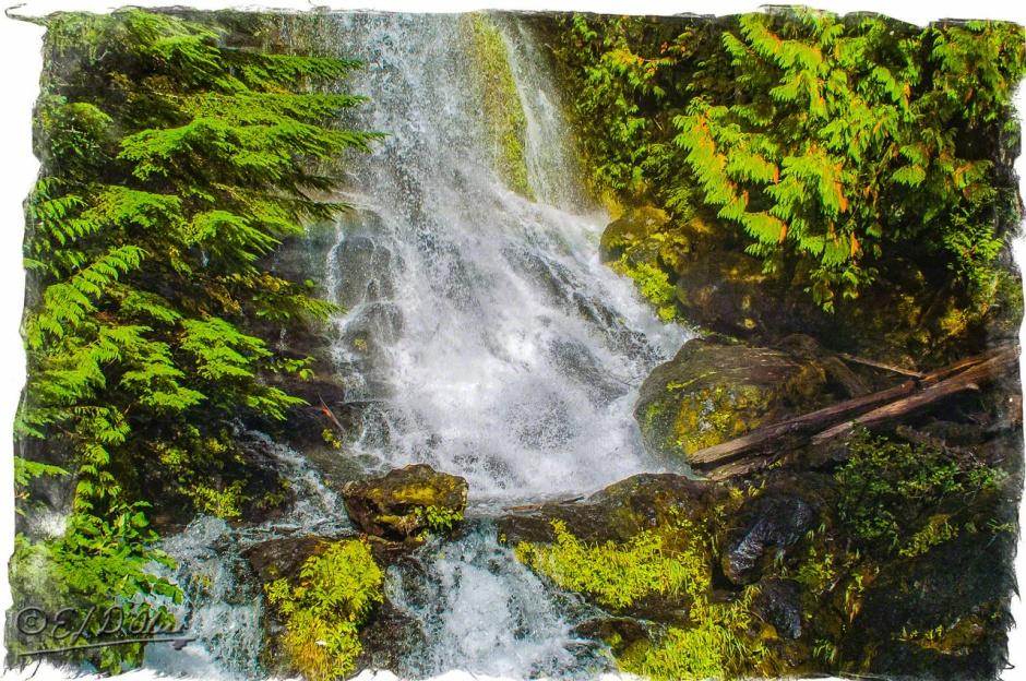 DSC_0021-Mt_Rainier_Drive-Processed_DIGI