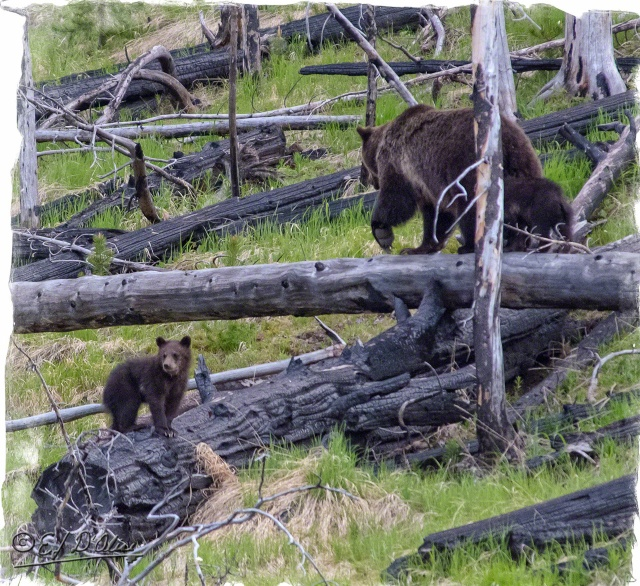 Yellowstone June 2015