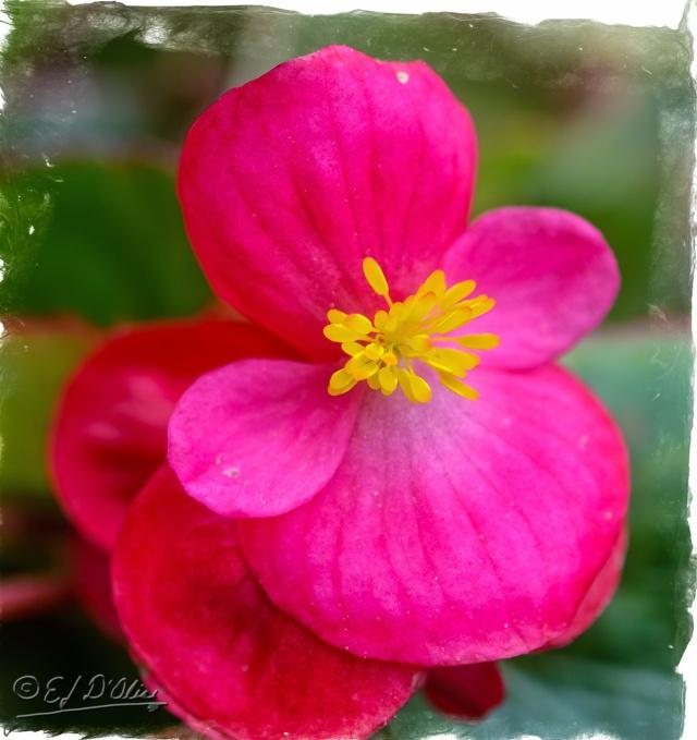 June 2015 Flowers