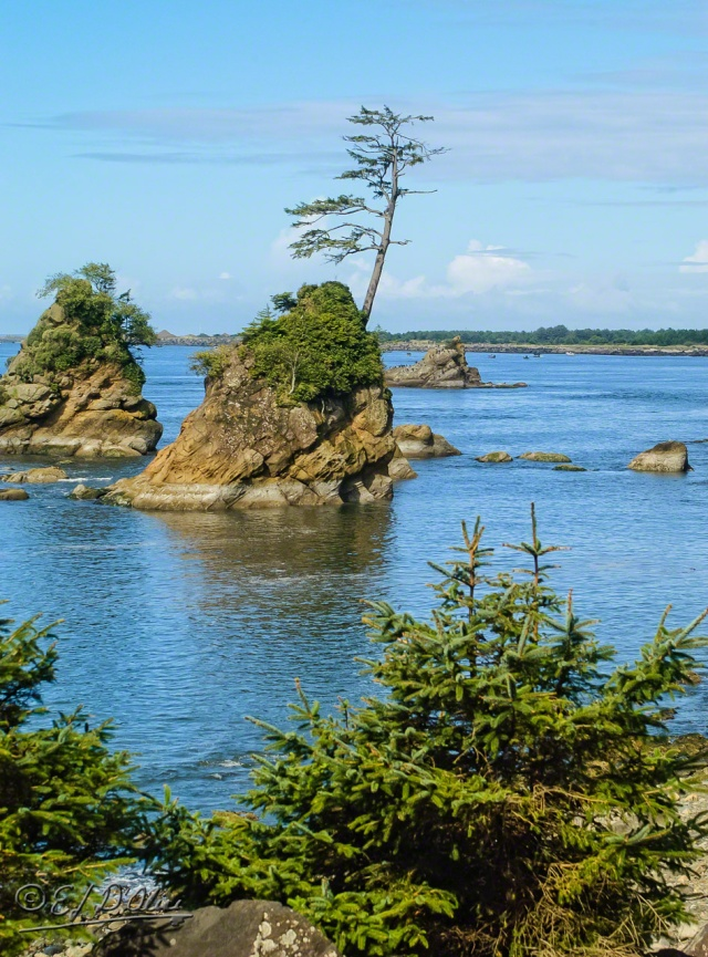 0023-Oregon_Coast-Processed_DIGI