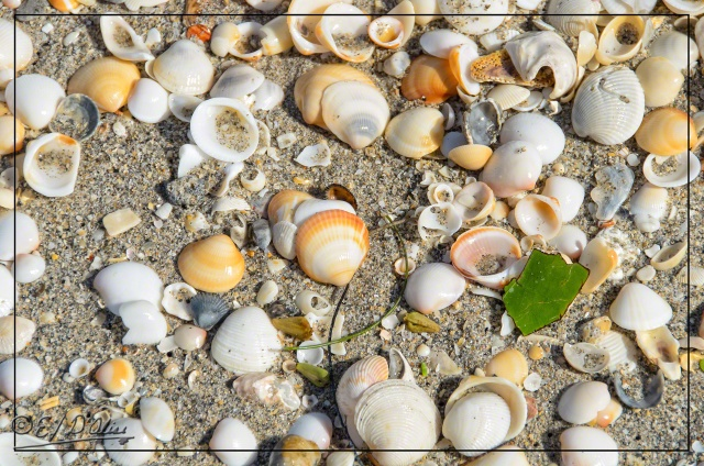 The shells . . .