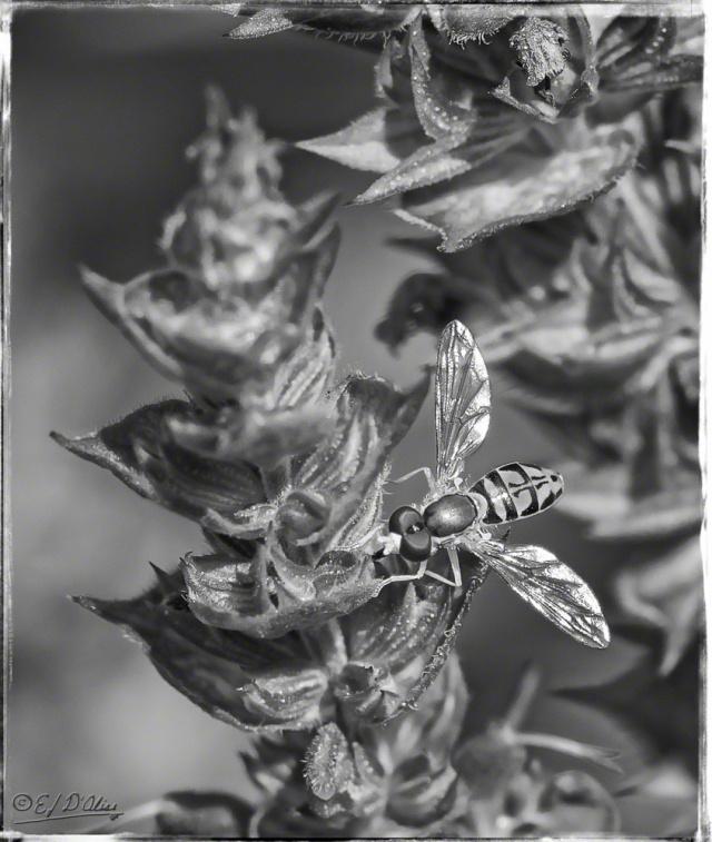 Flowers, C-130, Bugs,