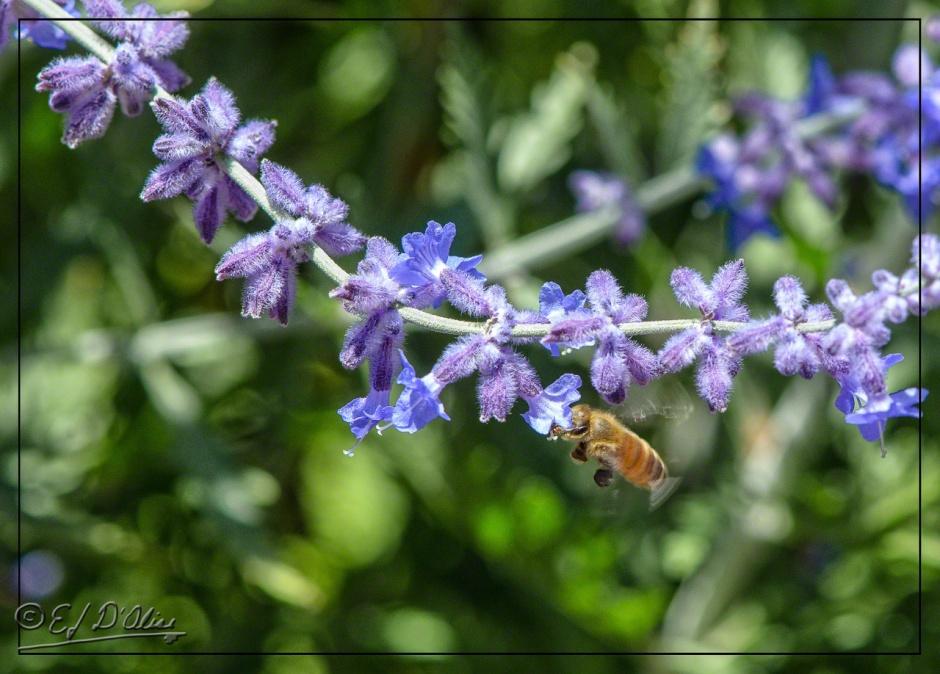2014 Hummingbirds, flowers, spiders,
