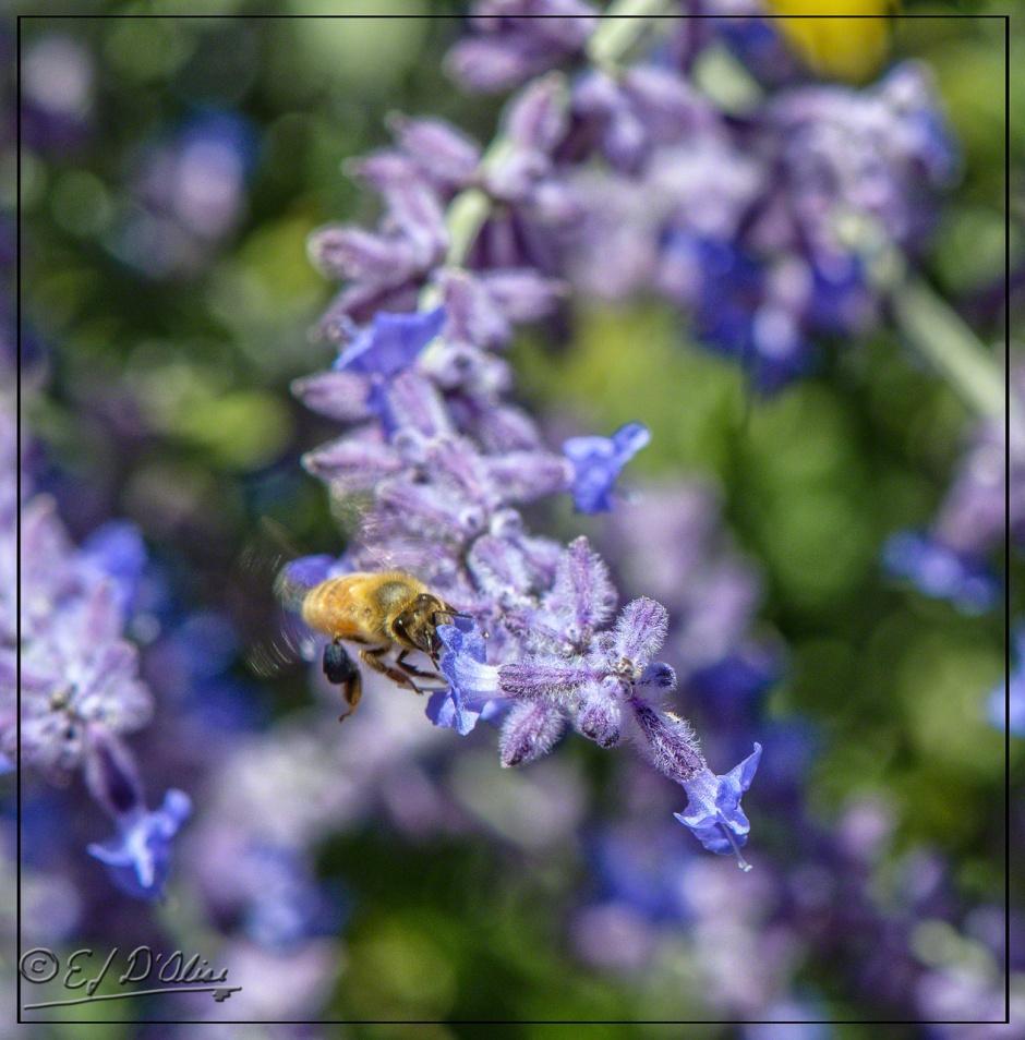 Notice the pollen sack