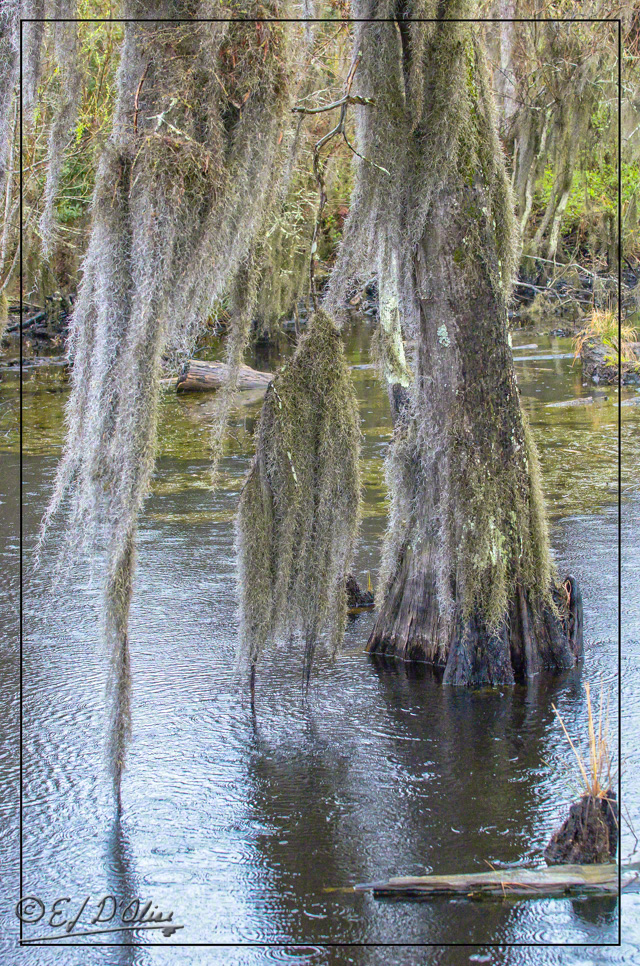 Savannah, Wildlife Preserve,