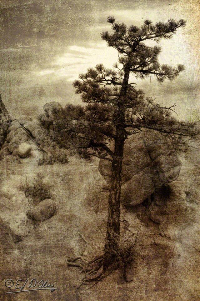 0024-Garden_of_the_Gods-Processed-14_DIGI