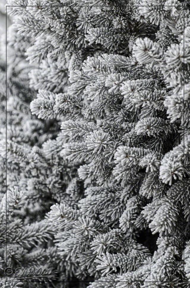 Short Needles Pine