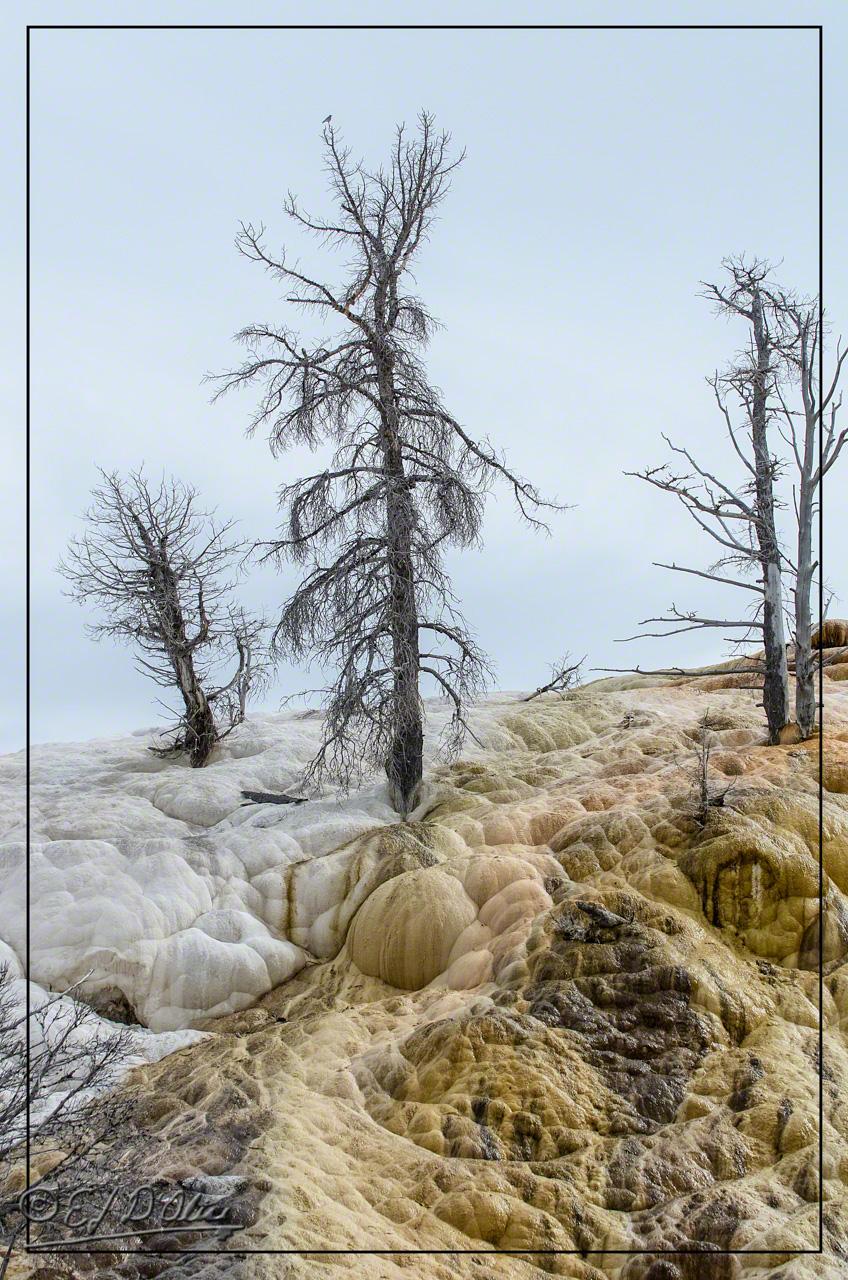 Yellowstone June 2015