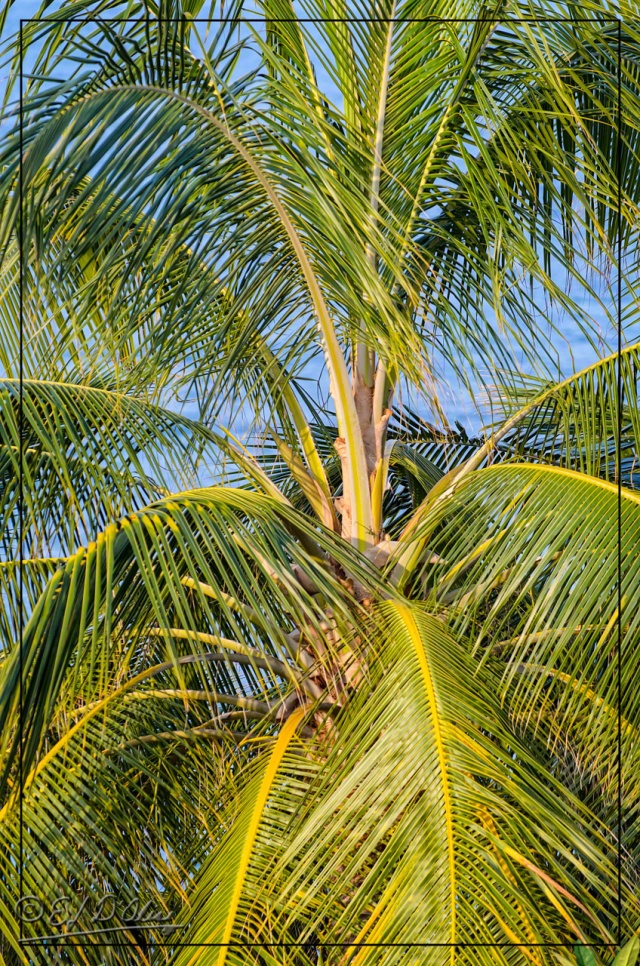 . . . and the palms, too.