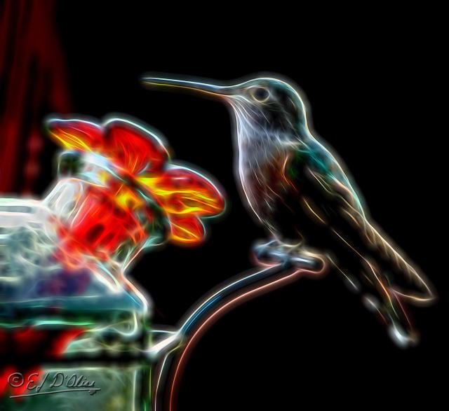 007-1661_rt_at_feeder-processed-3_digi