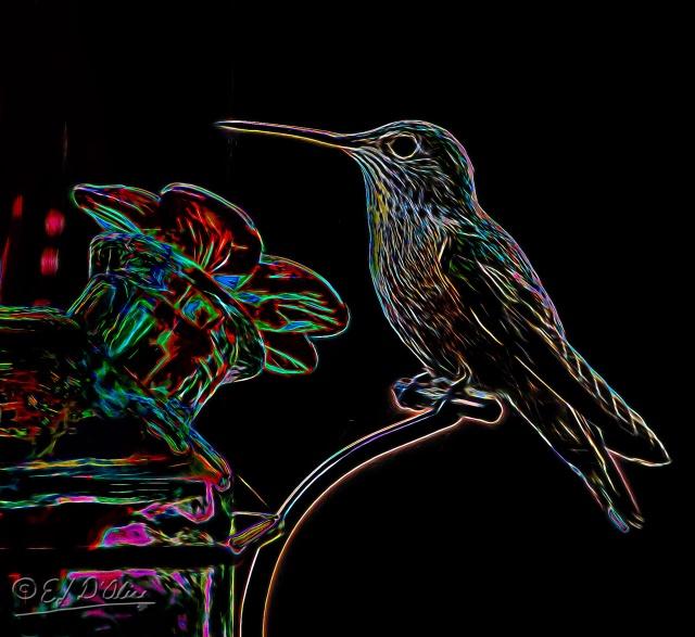 008-1661_rt_at_feeder-processed_digi