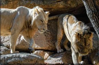 1952_CheyenneMtn_Zoo_A-Processed_DIGI