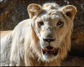 1953_CheyenneMtn_Zoo_A-Processed_DIGI
