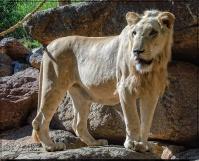 1954_CheyenneMtn_Zoo_A-Processed_DIGI
