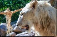 1956_CheyenneMtn_Zoo_A-Processed_DIGI