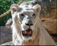 1957_CheyenneMtn_Zoo_A-Processed_DIGI